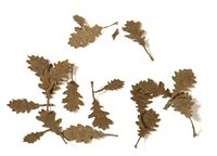 Oak Dry Leaves - Dry Leaves - Image 1