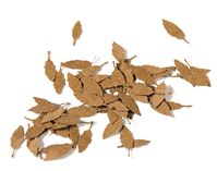 Universal Dry Leaves - Dry Leaves - Image 1
