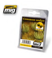 Common sedge - Image 1